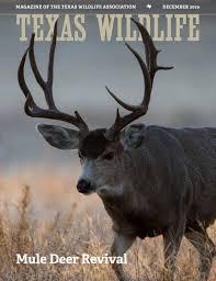 Texas Wildlife December 2019 Mule Deer Revival By Texas Wildlife Association Issuu