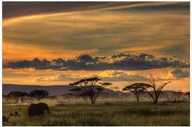 "JP London Solvent Free Print PAPXL1X42438 Africa African Animals Safari  Plains Dusk Ready to Frame Poster Wall Art 60"" h by 40"" w - - Amazon.com"