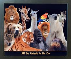 Amazon Com Impact Posters Gallery Zoo Animal Collage Kids Room Art Print Framed Wall Decoration Picture 18x22 Home Kitchen