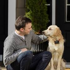 How To Train Your Dog To Use A Pet Fence Petsafe Articles
