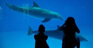 dolphin sanctuary