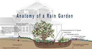 rain garden transpa png clipart