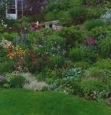 perennial garden in june zone 6 ideas