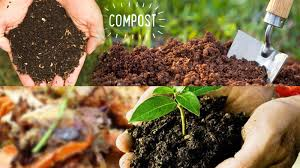 homemade organic fertilizer for garden