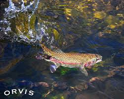 50 orvis fly fishing wallpaper on