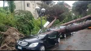 VIDEO Violento temporale, alberi crollano a Milano Marittima sulle ...