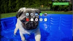 cute pug wallpaper hd you