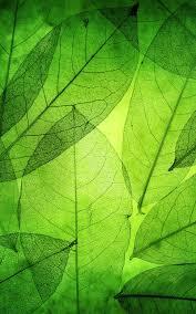 خلفيات حيةالأوراق الخضراء For Android Apk Download