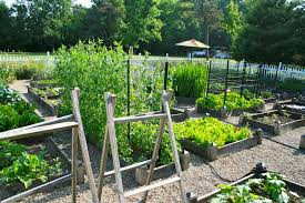 vegetable garden ideas 25254 small