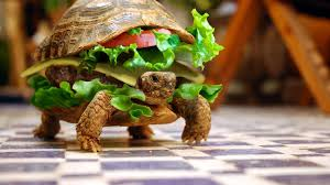 free cute turtle wallpapers sf