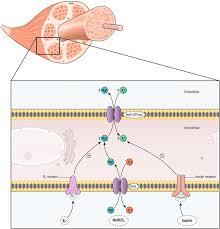 hyperkalemia in the acutely ill patient