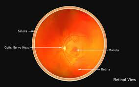 retinal disease diagnosis retinal
