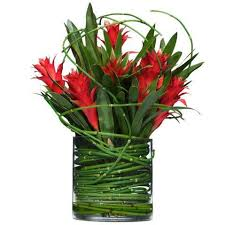 Venta Flor Heliconia Ginger Eventos programados Barranquilla