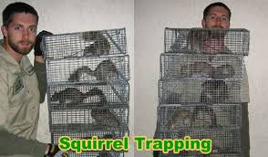 what is the best bait to trap squirrels