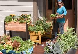 create a patio vegetable garden