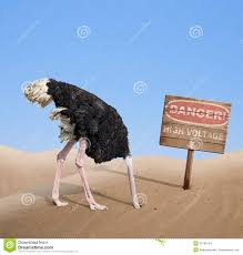 Scared Ostrich Burying Head In Sand Under Danger Stock Photo ...
