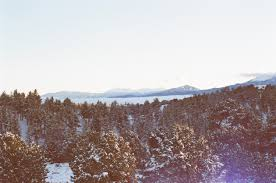 images forest snow winter sky sunlight morning hill