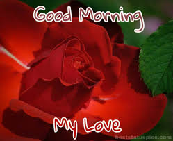 good morning images with romantic rose