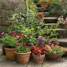 container gardening five tips for