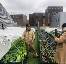 rooftop garden provides organic veggies