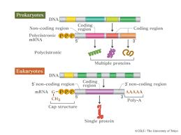 biol 1406 transcription and