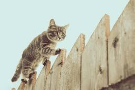 Best Wireless Electric Fence For Cats Above Ground Feline Follower