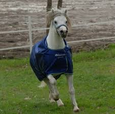 smartex turnout pony rugs at best
