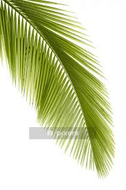 Palm Leaf Wall Decal Pixers We Live To Change