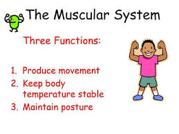 The Muscular System Notes pg 65 Did you get your tickets??? - ppt download