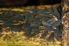 19+ Rain Flies Termites  Background