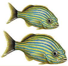 Blue Striped Grunt Wall Decal Tropical Fish Wall Decals