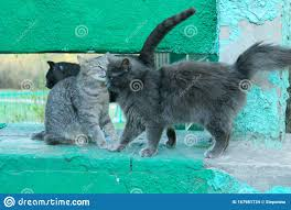 Three Cats Outdoor Gray Cats Over Green Fence Background Stock Photo Image Of Animal Outside 167981734