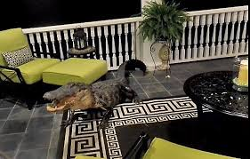 Alligator Climbs To A Second Story Mount Pleasant Porch Through A Screen Door And Then Refuses To Leave News Postandcourier Com