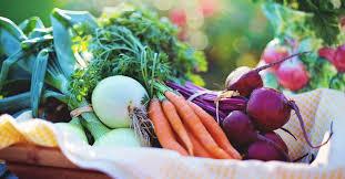 vegetable garden size calculator how