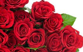 rose flowers wallpaper 2560x1600 38179