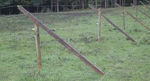 Low Cost Fence Keeps Deer Out Good Fruit Grower