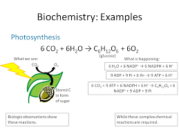 photosynthesis equation in words bing