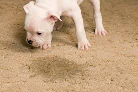 cleaning pet stains from carpeting