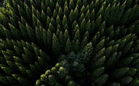 aerial view green nature trees
