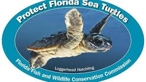 Show Support For Manatee Sea Turtle Conservation With New Decals From The Fwc