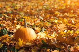 Northern Gardening: Options for growing pumpkins | Flin Flon Reminder