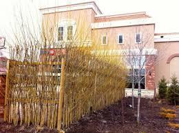 A Living Willow Fence Toronto Gardens
