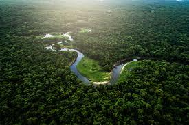 Bolsonaro chce wyciąć Puszczę Amazońską. Eksperci przerażeni