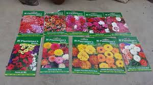 winter flowers seeds from india you