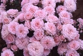Tumblr Rose Wallpapers - Goth Pastel Desktop Backgrounds ...