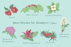 36 best shrubs for shade gardens