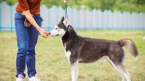 Useful Tips On Underground Dog Fence And Dog Training Dogs Dog Training Obedience Dog Training