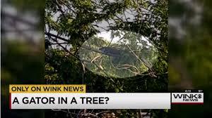 Alligators Can Climb Trees Now Blogs