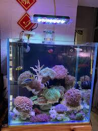 Đèn Zetlight1201 wifi - Đèn Led cho bể cá biển