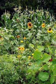 adding flowers to the vegetable garden